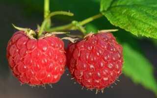 Чай с вареньем малиновым: вкус детства
