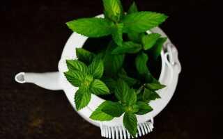 Очищающий чай из трав для очистки всего организма