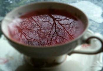 Чай красный или черный?