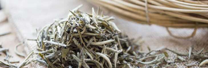 Белый чай: польза и вред. Как заваривать белый чай