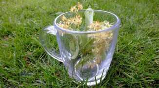 Липовый чай как натуральное лечебное средство