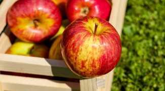 Вкусный и полезный чай с яблоками