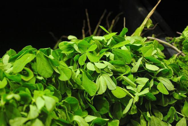 Листья пажитника