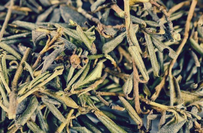 Рододендрон Адамса чай долголетия